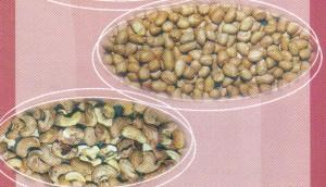 ธัญพืชมีมักปนเปื้อนสารอะฟลาทอกซิน
