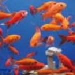 ชุดทดสอบน้ำในพิพิธภัณฑ์สัตว์น้ำ, บ่อเพาะเลี้ยงสัตว์น้ำ